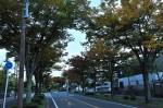 洛西ニュータウンの並木