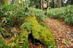 苔探勝路の苔