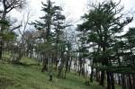 バス停裏の樹林