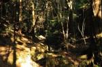 若王子山への谷道