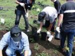 植樹用苗の鉢換え作業